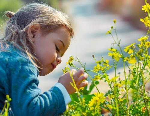 Child looking at flowers outside.