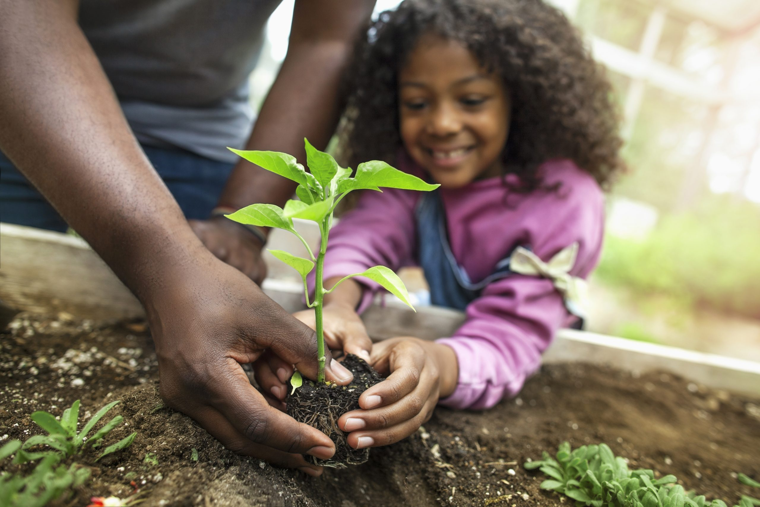 Child planting with adult.